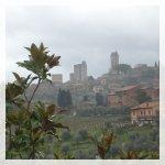 San Gimignano, vigneti e oliveti
