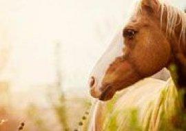 HORSEBACK RIDING TOUR